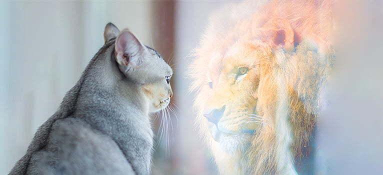 A valódi hatalom azzal kezdődik, hogy tükörbe nézel